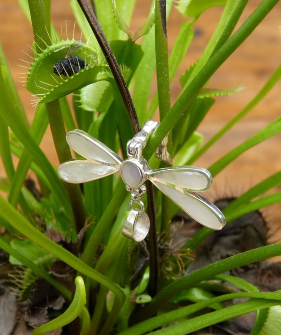 Mother of pearl silver dragonfly pendant image 3
