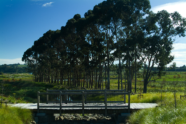 NZ Garden & Art Festival, Nov 2014
