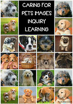 Caring For Pets | Inquiry | What Do You Want To Find Out?
