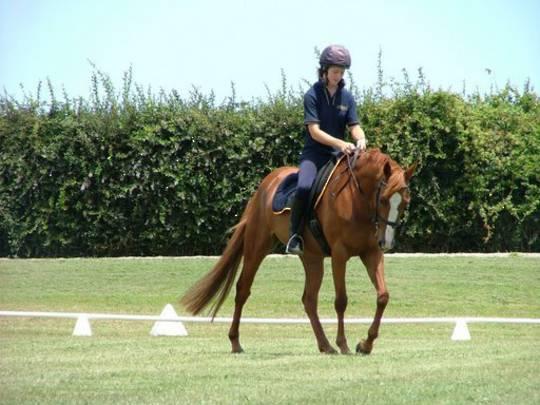 Sporthorse Full Training