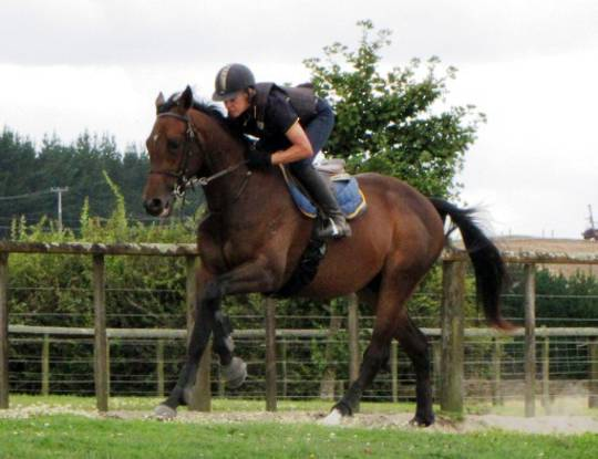 Racehorse Full Pre-Race Training