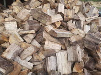 Old Man Pine Stored Outside -Delivered from (click on image for prices)