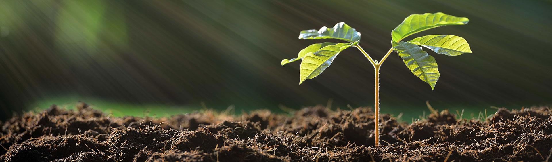 eco-plant