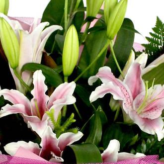 Oriental Lily Vox