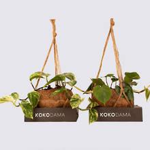 Kokodama 12cm Hanging Plants