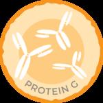 Anti-Proteinase 3 IgG