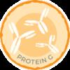 Anti-Calprotectin IgG