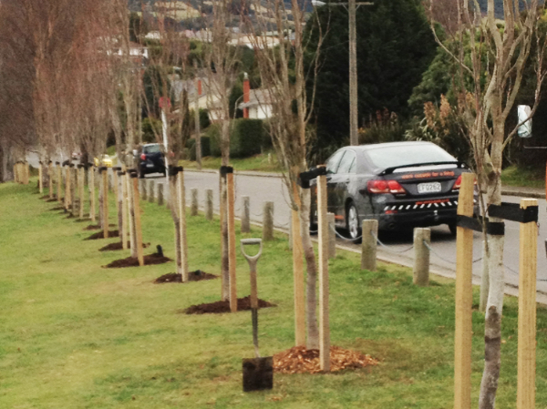 planting trees new zealand