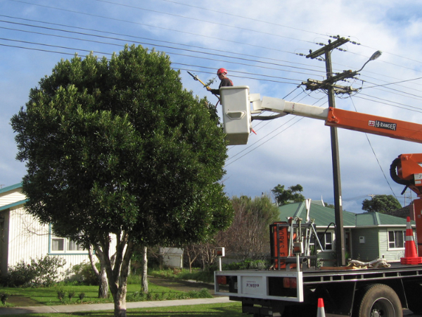 residential powerline pruning-79