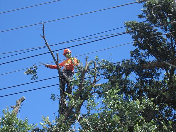 utility services asplundh nz