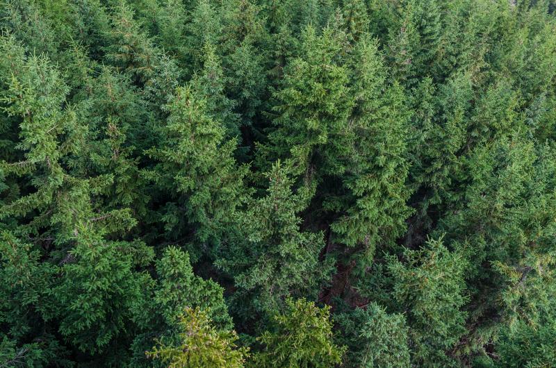 trees-499