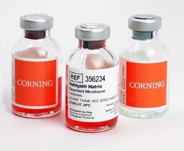 CORN 3 ExtraCellularMatrices