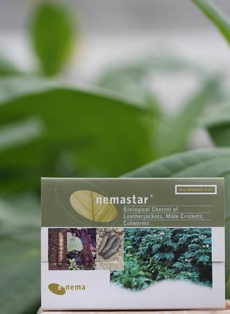 nemastar® for Flea, Beetle and Cutworm Control