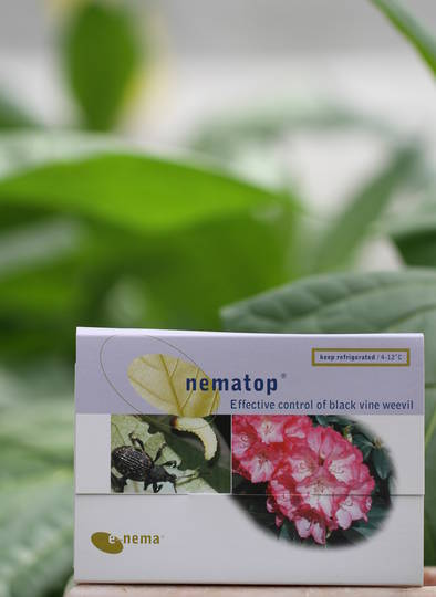 nematop® for Black Vine Weevil and Grass Grub Control