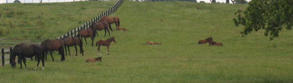 mares_and_foals_1.JPG