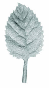 Leaf (Three Sizes)