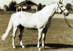 raswan(copy)