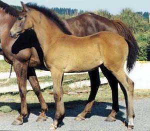 foal-12-weeks