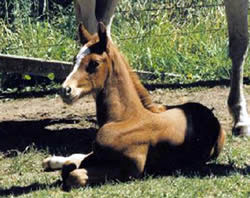 foal-3-days-old