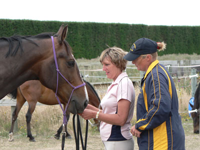 Adult-horse-riding-lessons-in-arena