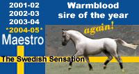 maestro-warmblood-of-the-year