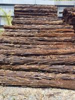 Ponga Logs 2.5m
