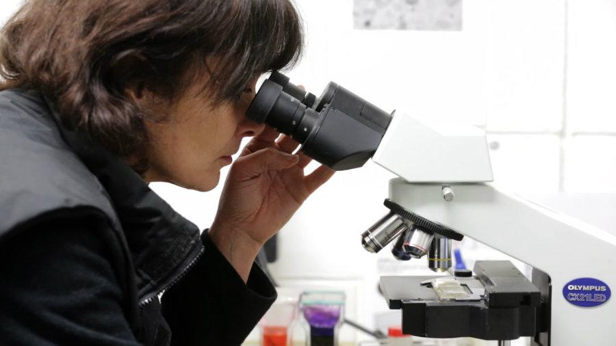 microscope(copy)