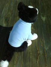 Dog Sweatshirt - Blue