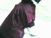 Burgundy Dog Coat