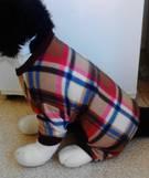Dog PJ's Tartan