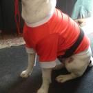 Dog Santa Sweatshirt