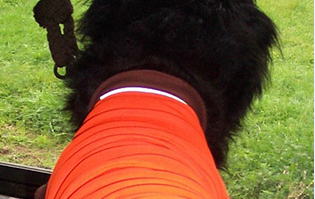 Hi Vis Possum Merino Clothing for Pets
