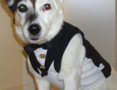 dolly dogs tux | possum pet clothing