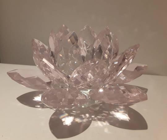 Baby Pink Lotus 40mms