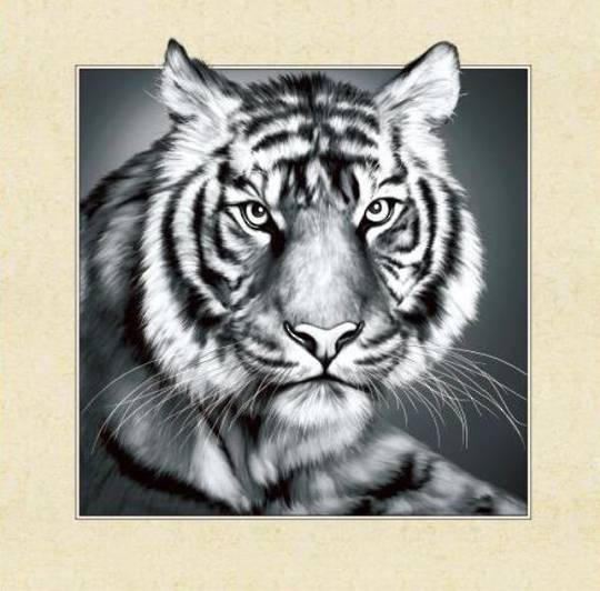 5D Black and White Tiger