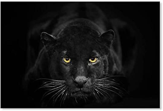 Black Panther Framed Canvas Print