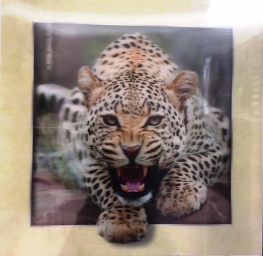 Leopard 5D Picture