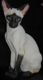 Country Artists Siamese Cat