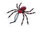 Red Jewelled Spider