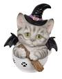 Witches Teacup Tabby Kitten