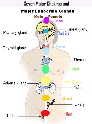 chakras20and20glands_86152901_std.jpg