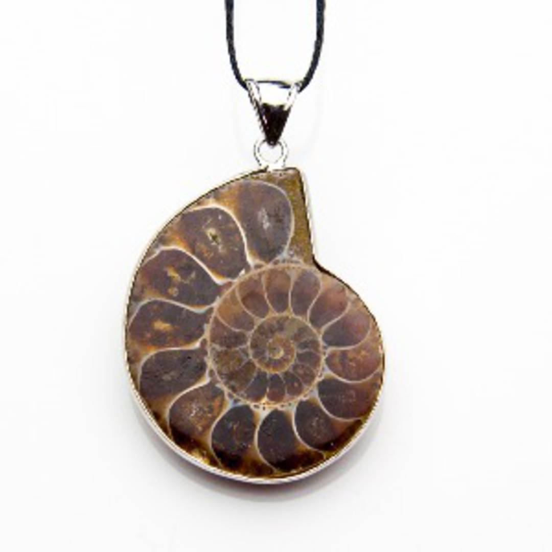 ammonite Slice Pendant
