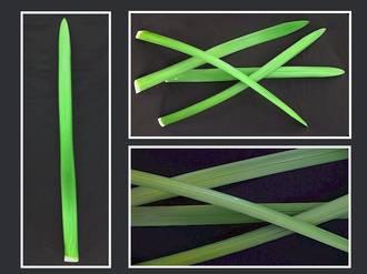 Flax – Dark Green Long