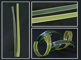 Flax – Dark Green with Light Green Edge