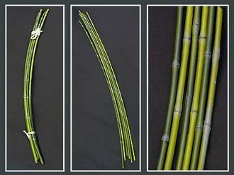 Bamboo - Green Bamboo Bundles 1x6
