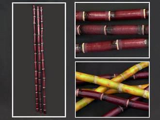 Bamboo – Burgundy Black Stem