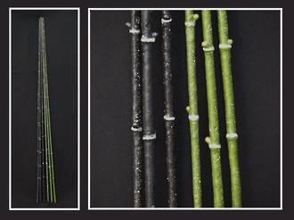 Bamboo – Black Fairy Bamboo