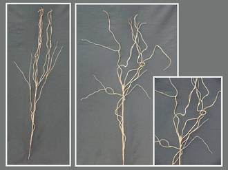 Willow – Brown Twisted Willow Stem