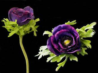 Anemone - Midnight Purple