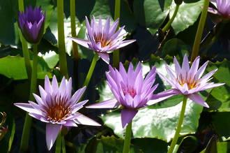 August Gardening Handbook - Download